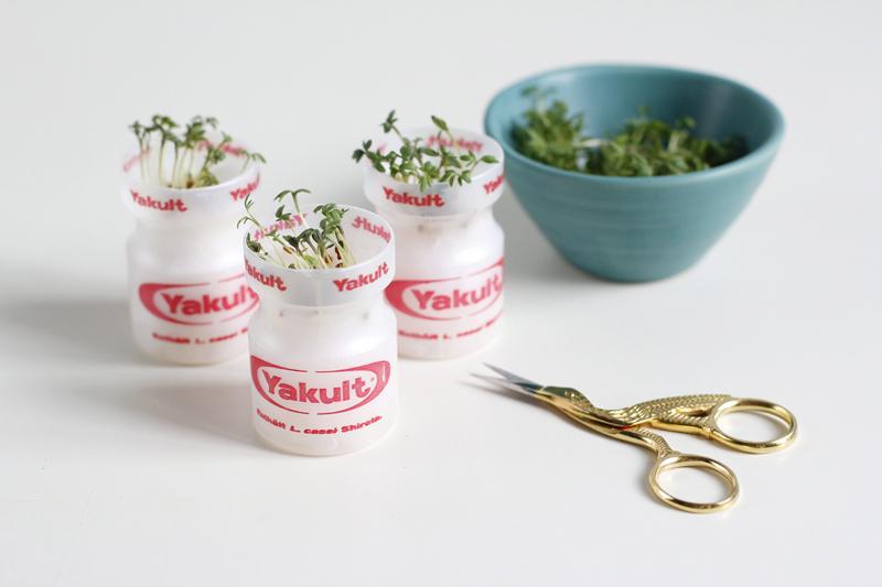 Kressegarten mit Yakult | we love handmade