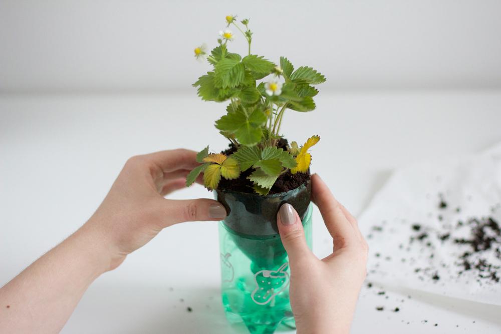 DIY: Kräuter einpflanzen |we love handmade