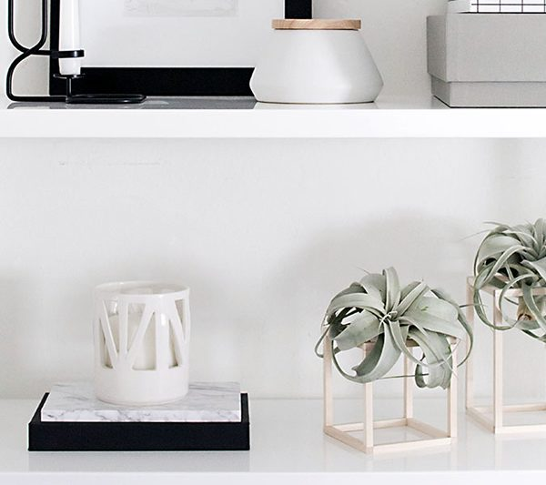 DIY-Air-Plant-Holders von homeyohmy.com