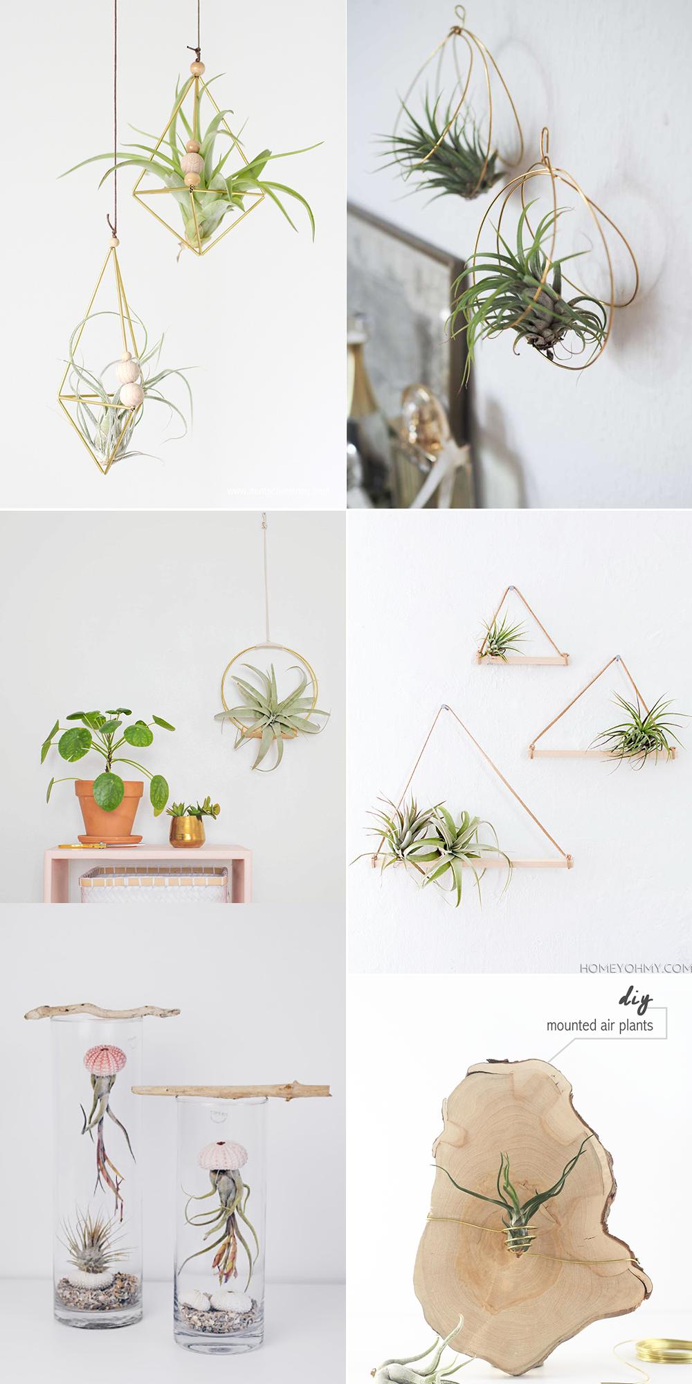 Luftpflanzen-Halterungen: DIY-Inspiration | we love handmade