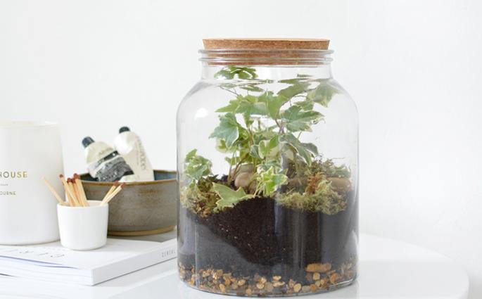 Anleitungen für ein Terrarium | we love handmade