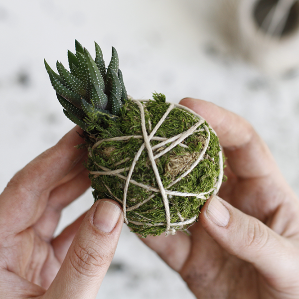 DIY: Kokedama mit Sukkulente | we love handmade