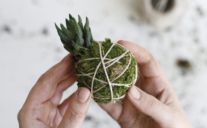 DIY: Kokedama mit Sukkulente | we love handmade