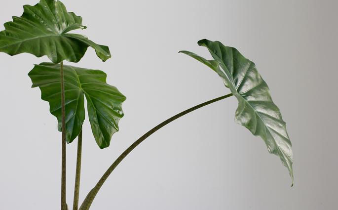 PlantFest: Pflanzentauschbörse am 6. Oktober 2019 | we love handmade