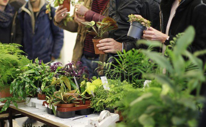 Erstes PlantFest Vienna