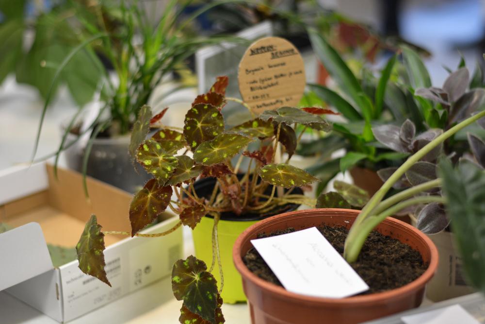 PlantFest Vienna Tauschbörse