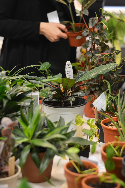 PlantFest Vienna