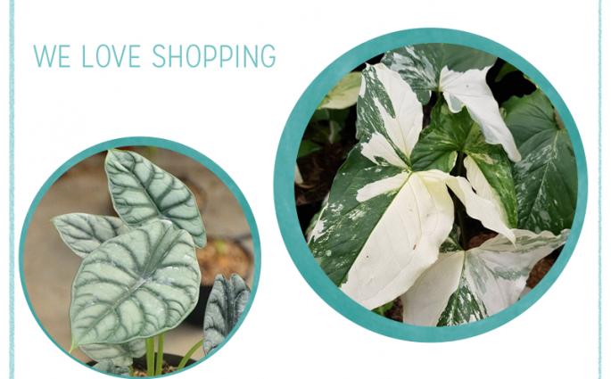 we love Shopping: Zimmerpflanzen   we love handmade