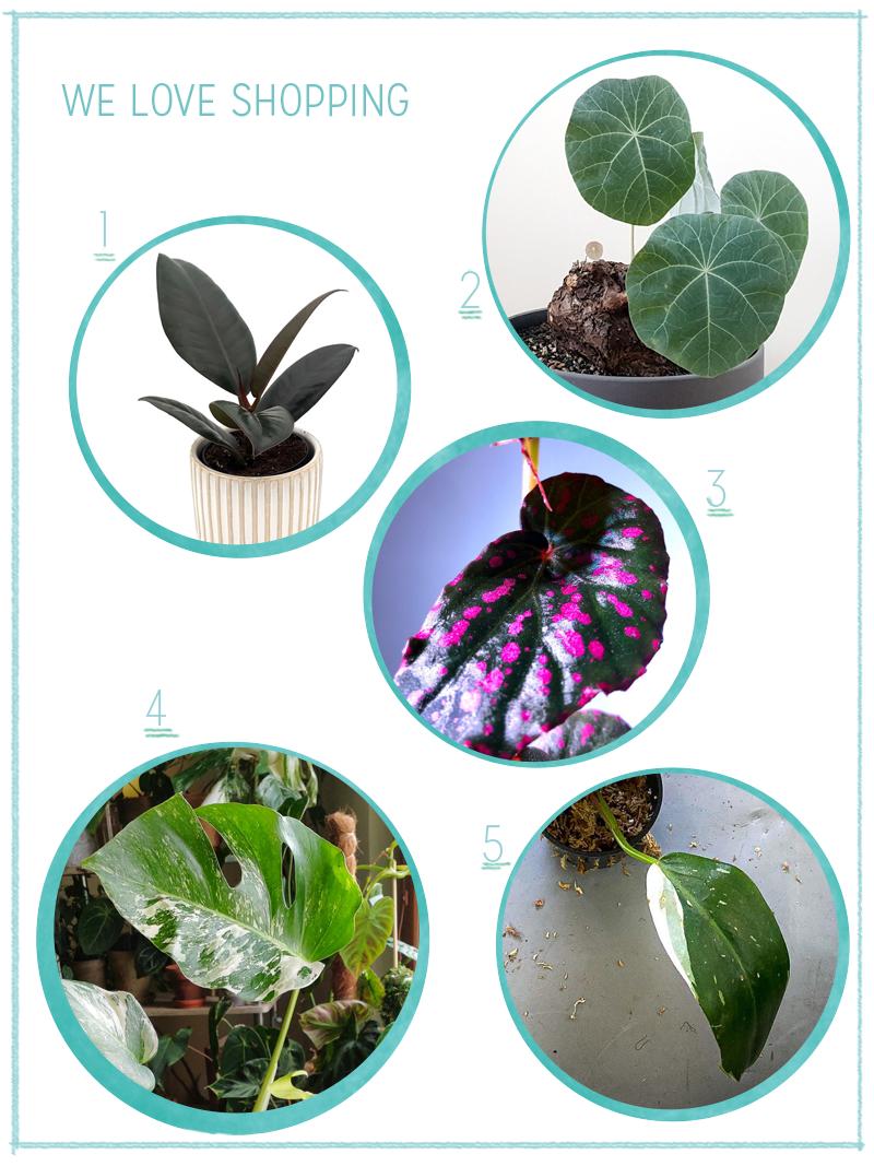 we love Shopping: Zimmerpflanzen | we love handmade