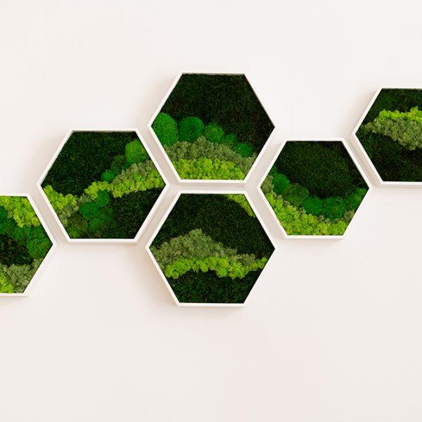 Moos- und Pflanzenbilder von ingreen | we love handmade