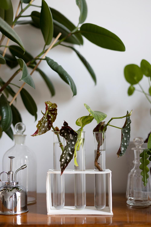 DIY: Anzuchtstation selber machen mit Modelliermasse und Reagenzglas | we love handmade