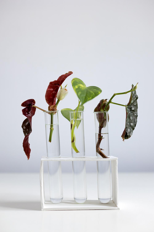 DIY: Anzuchtstation - Modelliermasse mit Reagenzglas | we love handmade